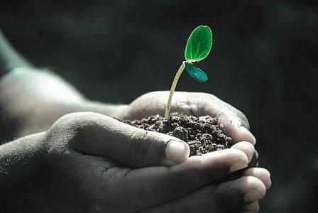 foto met plantje dat groeit in twee handen